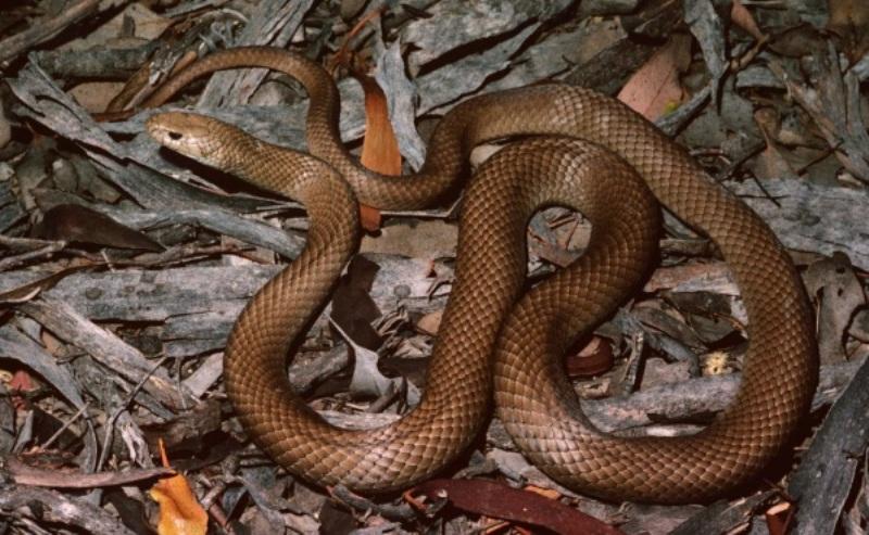 https: img-o.okeinfo.net content 2019 02 27 244 2023679 sempat-bermain-setelah-digigit-ular-nyawa-ismi-tidak-tertolong-LEMyqHEO6O.jpg