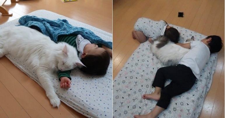 https: img-o.okeinfo.net content 2019 03 05 196 2026120 aksi-kucing-lucu-mengasuh-anak-anak-gemas-banget-lihatnya-hJCjYWlHoW.jpg