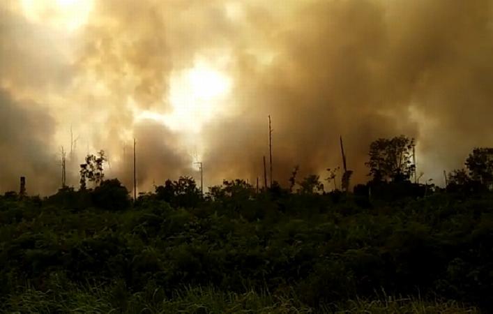 https: img-o.okeinfo.net content 2019 03 10 340 2028100 kebakaran-hutan-di-meranti-riau-bpbd-keluhkan-perusahaan-tak-bantu-pemadaman-i6qmB0dcM8.jpg
