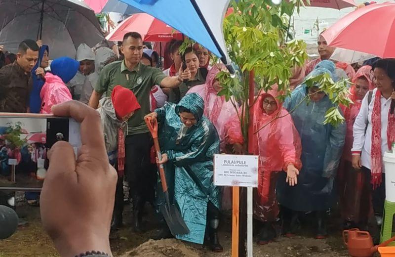 https: img-o.okeinfo.net content 2019 03 11 337 2028377 hujan-hujanan-iriana-jokowi-tanam-pohon-mangrove-di-tanjung-lesung-yAlhJR03vu.jpg