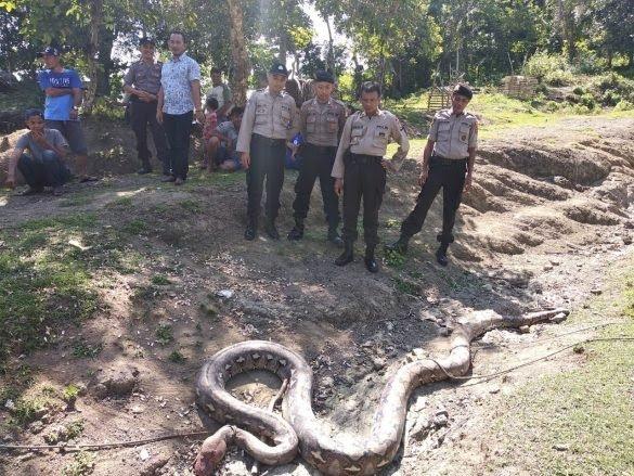https: img-o.okeinfo.net content 2019 03 12 609 2028777 ular-piton-sepanjang-7-meter-mati-dibantai-warga-karena-makan-anjing-dLcvjIIYpD.jpg