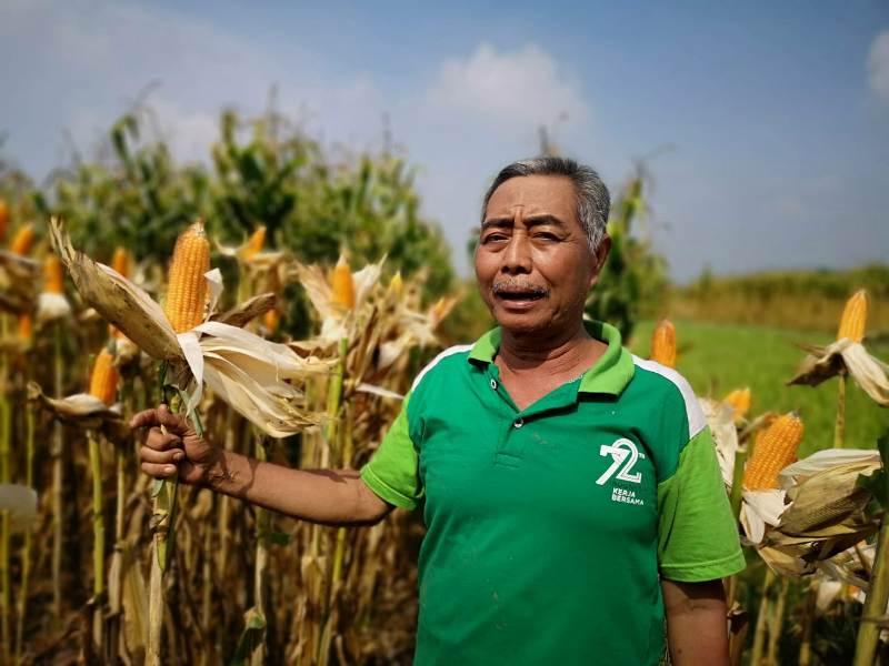 https: img-o.okeinfo.net content 2019 03 17 1 2031267 petani-tolak-politisasi-sektor-pangan-maKFtgKF45.jpeg