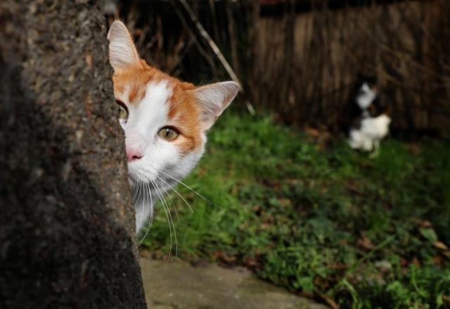 https: img-o.okeinfo.net content 2019 03 25 18 2034773 kucing-ini-hanya-serang-pria-perempuan-dan-anak-anak-dibiarkan-lewat-N1xc5VxKc5.jpg