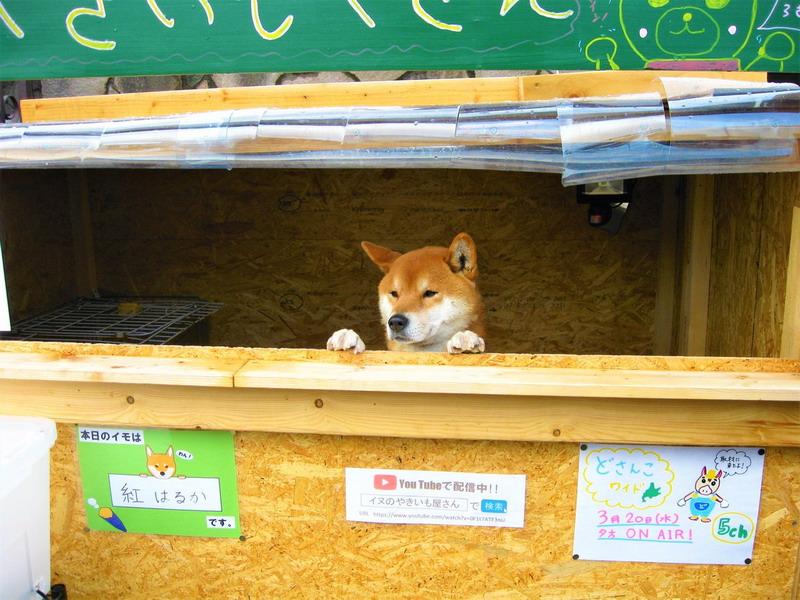 https: img-o.okeinfo.net content 2019 04 01 18 2037772 anjing-lucu-penjaga-toko-kentang-di-jepang-rebut-perhatian-warganet-J52eLjpTtd.jpg