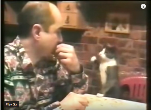 https: img-o.okeinfo.net content 2019 04 02 406 2038093 kucing-kelaparan-ini-gunakan-cara-unik-untuk-meminta-makan-LvT9eeOYvT.jpg