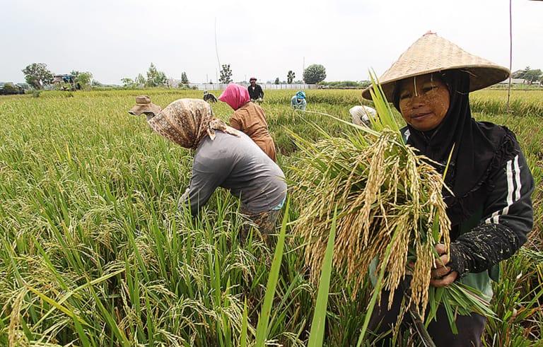 https: img-o.okeinfo.net content 2019 04 05 320 2039372 fao-apresiasi-pemerintah-indonesia-atasi-kerawanan-pangan-di-asean-eeqPdRtvY6.jpg