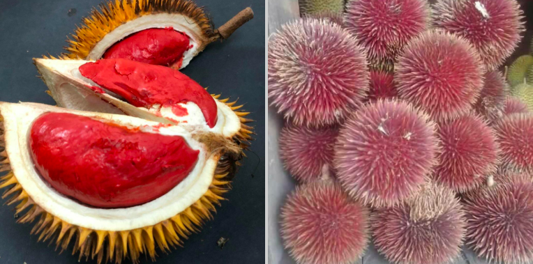 https: img-o.okeinfo.net content 2019 04 12 298 2042464 dari-sepetak-tanah-pria-asal-malaysia-punya-80-jenis-durian-n0ZkgSG6CI.png