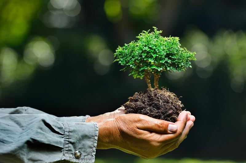 https: img-o.okeinfo.net content 2019 04 20 406 2045815 cara-masyarakat-berau-peduli-hutan-demi-cegah-kerusakan-lingkungan-wlV76ybaEQ.jpg
