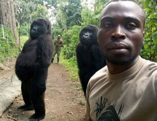 https: img-o.okeinfo.net content 2019 04 22 18 2046538 mirip-manusia-gorila-ini-bergaya-saat-swafoto-m48IaRp2MK.jpg