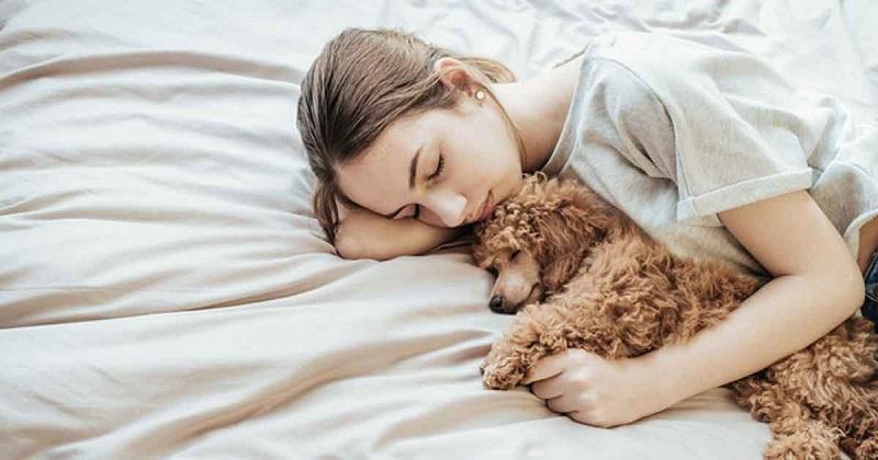 https: img-o.okeinfo.net content 2019 04 22 196 2046633 tidur-bareng-anjing-bisa-cegah-mimpi-buruk-crzhmzMdC7.jpg
