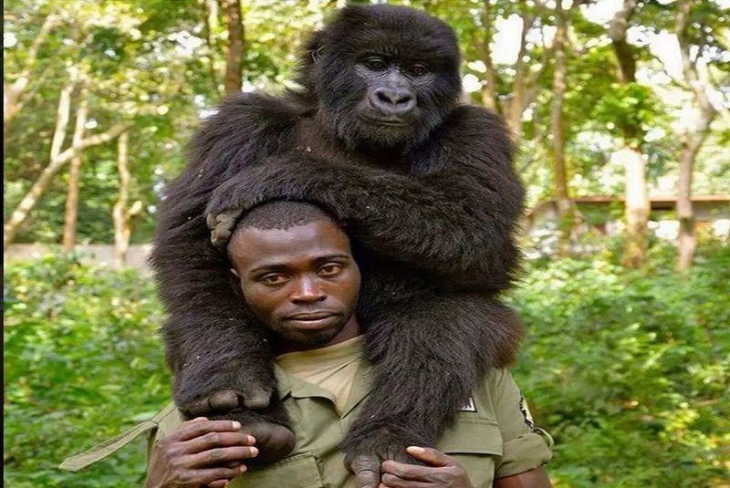 https: img-o.okeinfo.net content 2019 04 22 406 2046433 selfie-mesra-pejuang-anti-perburuan-hewan-dengan-gorila-usLnfpgbK8.jpg