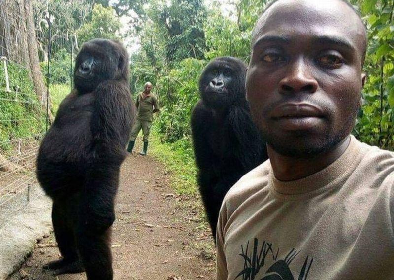 https: img-o.okeinfo.net content 2019 04 23 18 2046807 bergaya-cool-2-gorila-ini-ikut-selfie-dengan-tim-anti-perburuan-di-kongo-f9xG8o3ua5.jpg
