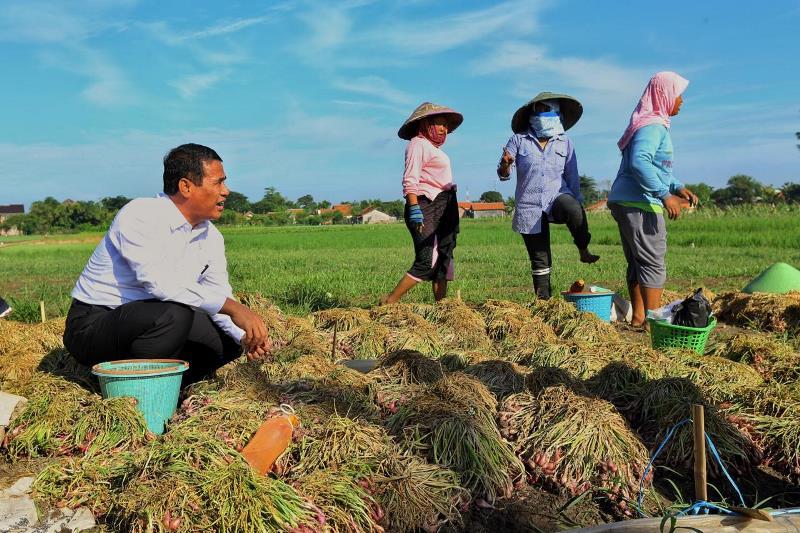 https: img-o.okeinfo.net content 2019 05 03 1 2050946 nilai-tukar-usaha-rumah-tangga-pertanian-stabil-jelang-ramadhan-7K2uOQ5czs.jpg