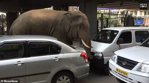 https: img-o.okeinfo.net content 2019 05 03 18 2050995 gajah-liar-masuk-kota-bikin-panik-warga-india-nznhqlxjph.jpg