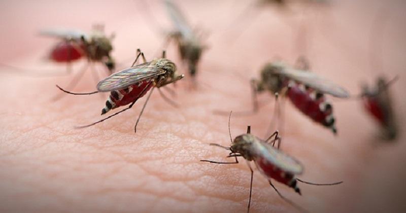 https: img-o.okeinfo.net content 2019 05 03 481 2050859 jutaan-nyamuk-dilepas-untuk-tangkal-demam-berdarah-wc7J9klmAj.jpg