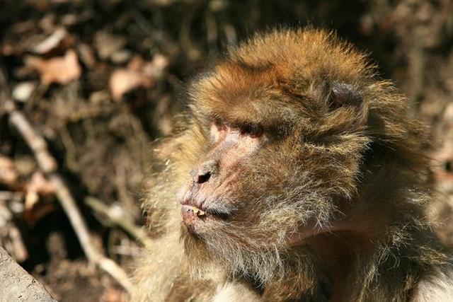 https: img-o.okeinfo.net content 2019 05 10 18 2054124 tak-bisa-puaskan-betina-seekor-monyet-dikeroyok-hingga-tewas-oleh-kawanannya-2oLmi0kscO.jpg