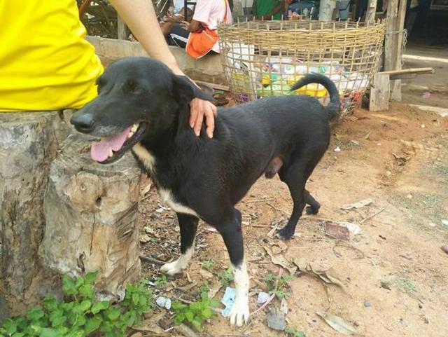 https: img-o.okeinfo.net content 2019 05 18 18 2057372 seekor-anjing-jadi-pahlawan-karena-menyelamatkan-bayi-yang-dikubur-ibu-kandung-SpQknw3Osz.jpg