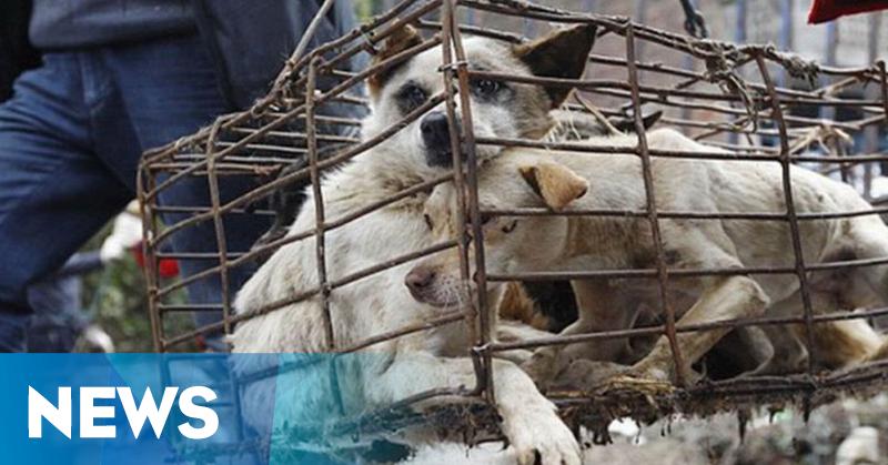 https: img-o.okeinfo.net content 2019 05 29 244 2061875 kasus-anjing-rabies-di-klungkung-bali-terus-bertambah-FFP3d1DLB2.png