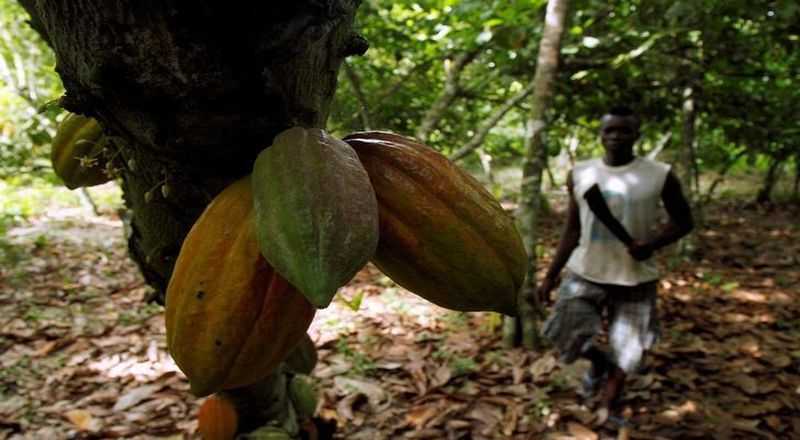 https: img-o.okeinfo.net content 2019 06 03 320 2063306 permintaan-tinggi-indonesia-akan-tambah-ekspor-kakao-ke-uni-eropa-0nS9AJs8Gr.jpg