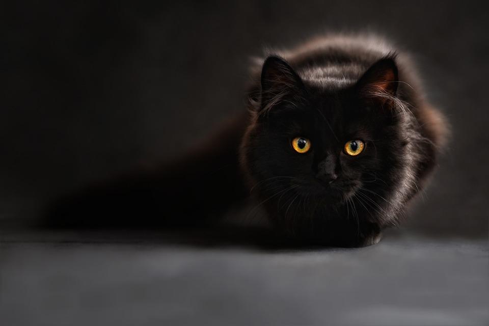 https: img-o.okeinfo.net content 2019 06 11 612 2065266 takut-dimandikan-kucing-ini-teriak-sebut-nama-agus-4QbU1RKeJx.jpg