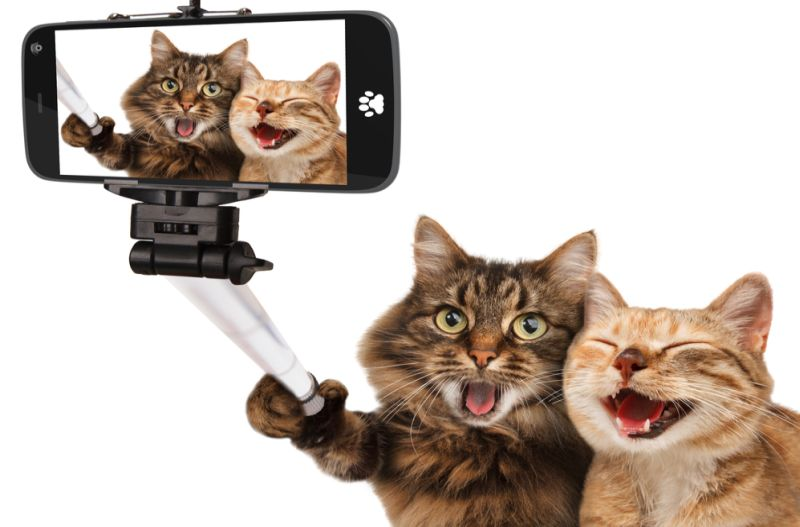 https: img-o.okeinfo.net content 2019 06 14 612 2066470 jangan-cuma-nonton-politik-video-hewan-lucu-ampuh-loh-hilangkan-stres-kyRXCpOEhh.jpg