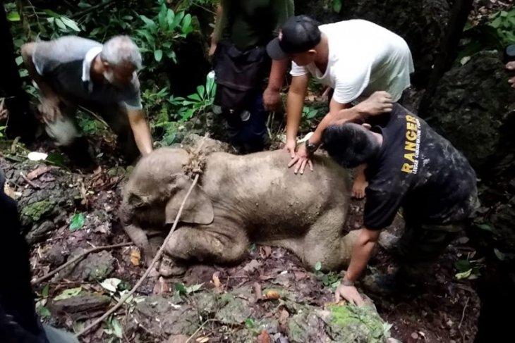 https: img-o.okeinfo.net content 2019 06 19 340 2068160 kasihan-anak-gajah-ini-terjerat-kawat-di-pedalaman-aceh-timur-2AZpG4Iafu.jpeg