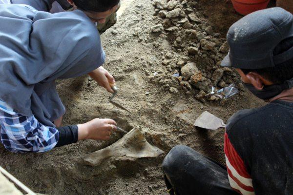 https: img-o.okeinfo.net content 2019 07 01 512 2073095 149-fosil-binatang-purba-ditemukan-di-tepi-bengawan-solo-tL21v8EAjy.jpg
