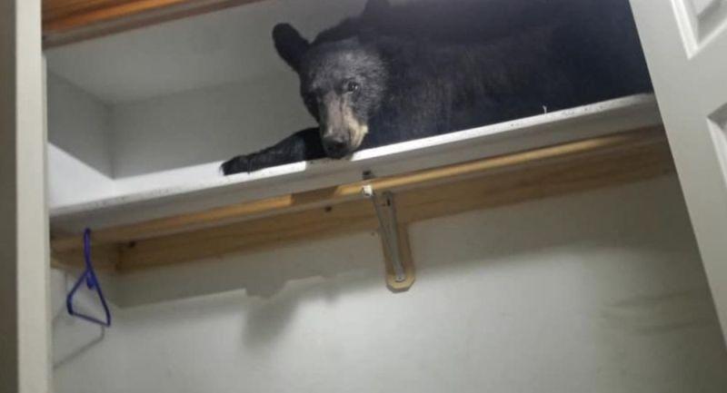 https: img-o.okeinfo.net content 2019 07 09 18 2076727 keluarga-di-as-terkejut-menemukan-beruang-tidur-di-lemari-pakaiannya-7R1Cv6Ycd2.jpg