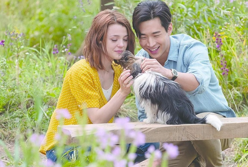 https: img-o.okeinfo.net content 2019 07 11 206 2077761 a-dog-s-journey-ajarkan-indahnya-persahabatan-manusia-dan-anjing-xGgCNtV7kz.jpg