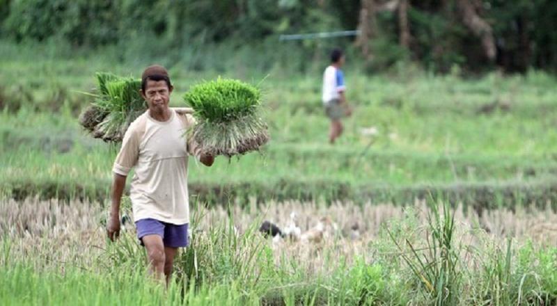 https: img-o.okeinfo.net content 2019 07 13 1 2078351 ini-manfaat-alsintan-rice-transplanter-untuk-pertanian-WqrtWNITJZ.jpg