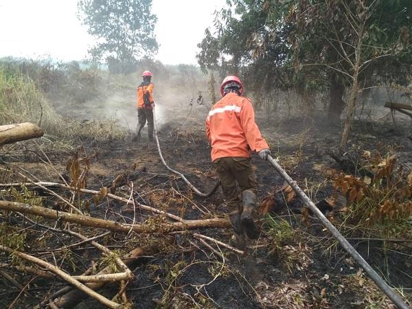 https: img-o.okeinfo.net content 2019 07 15 340 2079172 3-517-hektare-hutan-dan-lahan-di-riau-terbakar-I72Lw3WyKa.jpg