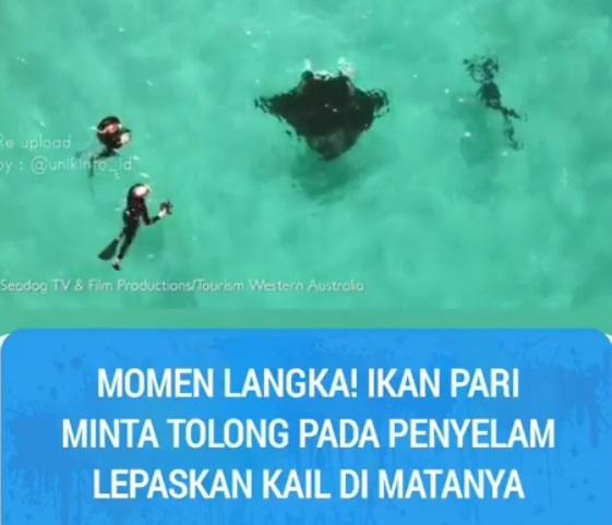 https: img-o.okeinfo.net content 2019 07 17 612 2080137 kesakitan-ikan-pari-terpaksa-minta-tolong-penyelam-lepaskan-kail-di-matanya-NhZ3AfmVgj.jpg