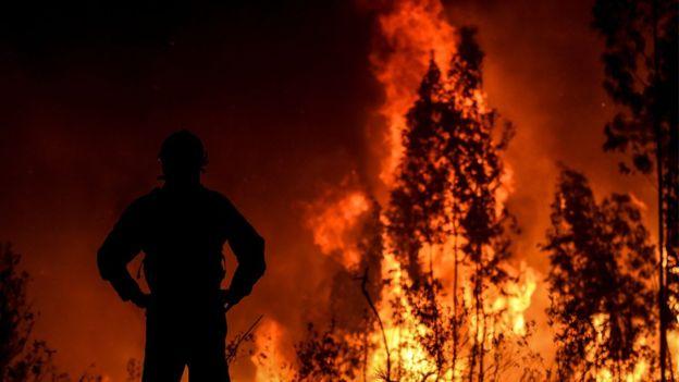https: img-o.okeinfo.net content 2019 07 22 18 2081917 800-petugas-pemadam-dikerahkan-untuk-atasi-kebakaran-hutan-besar-di-portugal-Ownjo3ZGjc.jpg
