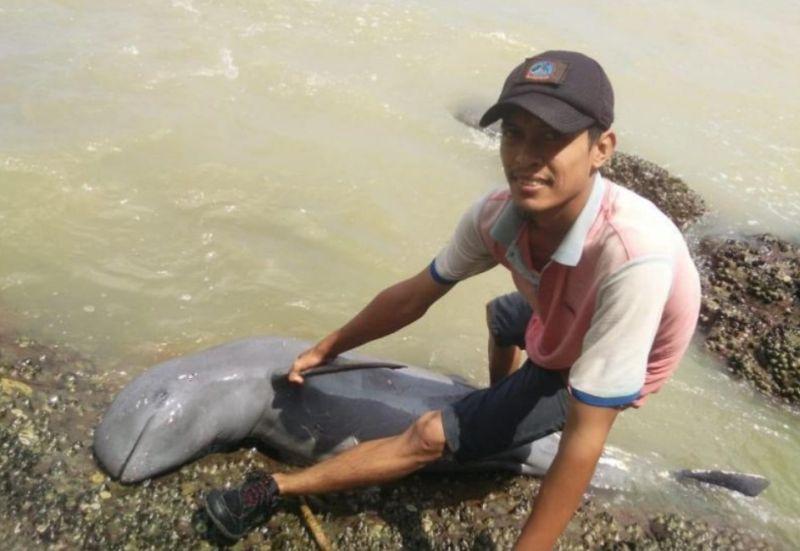 https: img-o.okeinfo.net content 2019 07 25 340 2083344 bangkai-lumba-lumba-terdampar-di-bibir-pantai-pulau-penibung-bBvhEG3tGN.jpg