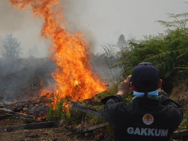 https: img-o.okeinfo.net content 2019 08 03 337 2087301 bakar-lahan-seluas-274-hektare-di-kubu-raya-seorang-pria-ditangkap-cmWJGfml0m.jpg