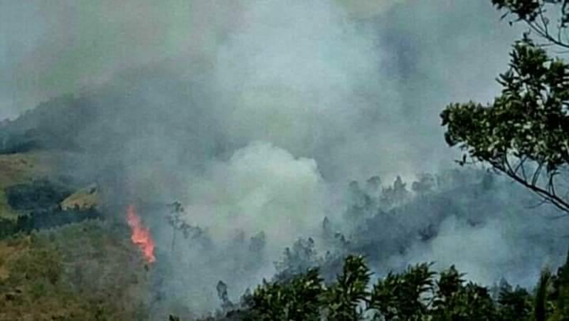 https: img-o.okeinfo.net content 2019 08 06 519 2088655 kebakaran-hutan-di-jawa-timur-berhasil-dipadamkan-gdKPlh6eWw.jpg