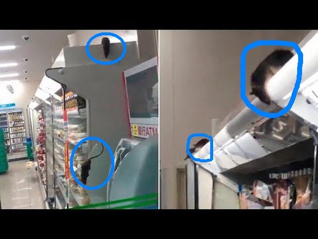 https: img-o.okeinfo.net content 2019 08 07 18 2089095 viral-tikus-tikus-berlarian-di-minimarket-milik-jepang-39EtREyCpf.jpg