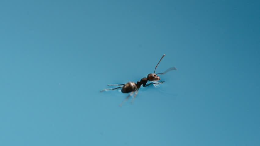 https: img-o.okeinfo.net content 2019 08 07 614 2088997 nasihat-mbah-moen-untuk-menolong-semut-yang-terpeleset-ke-dalam-air-EhACGjixIz.jpg