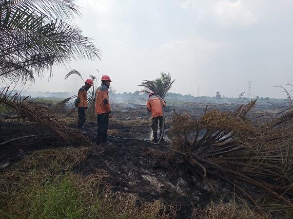 https: img-o.okeinfo.net content 2019 08 09 340 2089614 polisi-indikasikan-1-korporasi-bakal-jadi-tersangka-kebakaran-hutan-dan-lahan-di-riau-M8OnW2uxgQ.jpg