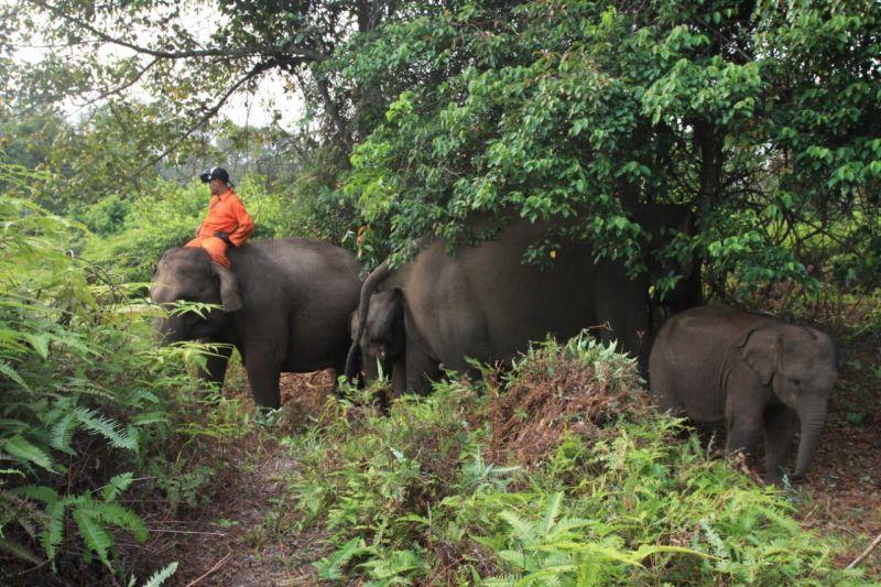 https: img-o.okeinfo.net content 2019 08 14 340 2091737 taman-nasional-tesso-nilo-riau-terbakar-gajah-dievakuasi-FWvKn1mwIi.jpg