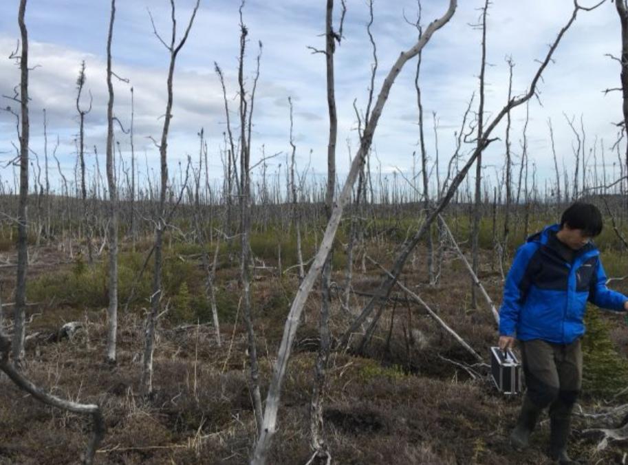 https: img-o.okeinfo.net content 2019 08 18 56 2093574 nasa-teliti-dampak-kebakaran-hutan-arktik-di-alaska-nEwMI1o6y0.jpeg