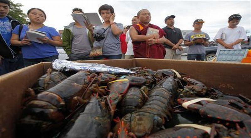 https: img-o.okeinfo.net content 2019 08 19 320 2093858 perang-dagang-buat-nelayan-lobster-as-kehilangan-pasarnya-9FaFPN2yVy.jpg