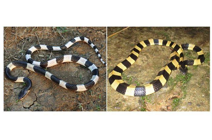 https: img-o.okeinfo.net content 2019 08 22 338 2095429 sekuriti-di-tangerang-tewas-usai-coba-jinakkan-ular-dengan-sapu-lidi-xWewya6AWh.jpg