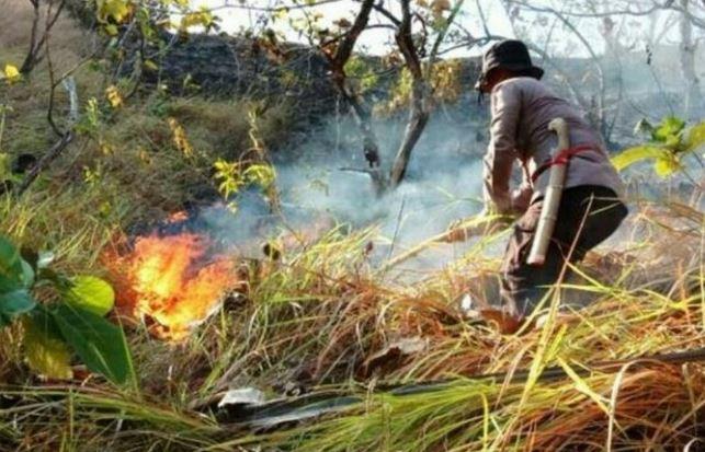 https: img-o.okeinfo.net content 2019 08 25 340 2096384 2-hektare-lahan-di-pegunungan-majene-hangus-terbakar-rrAccY6JDM.JPG
