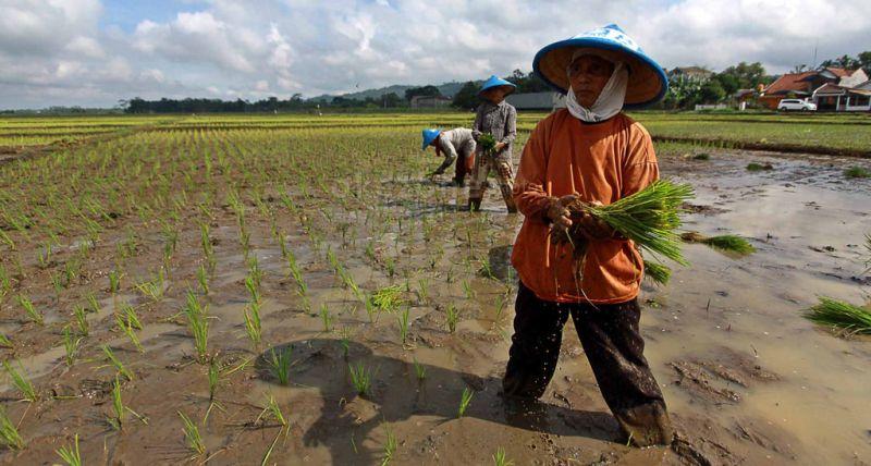 https: img-o.okeinfo.net content 2019 08 26 1 2096572 kementan-terus-sosialisasikan-peluang-pendanaan-untuk-petani-Vyg42ekpd0.jpg