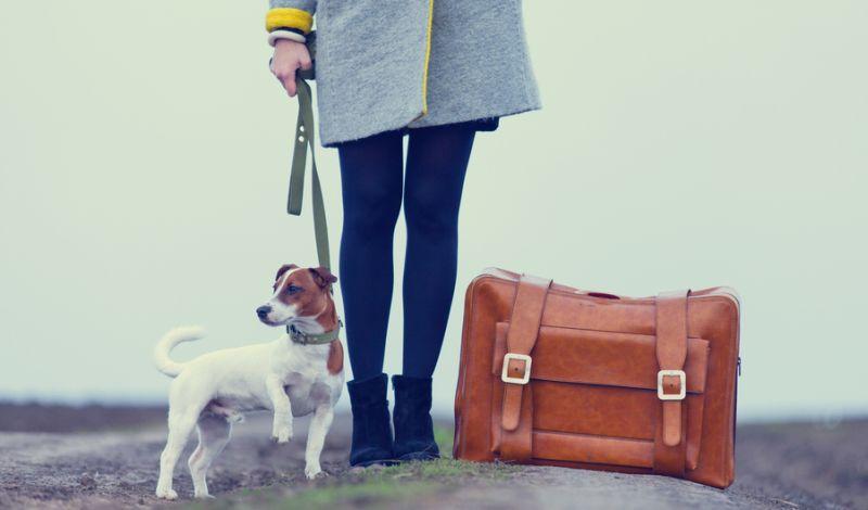 https: img-o.okeinfo.net content 2019 08 26 612 2096953 hari-anjing-sedunia-mahluk-malang-ini-malah-dikalungi-jangkar-n2W2MBHCy6.jpg