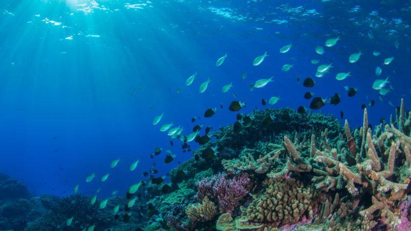 https: img-o.okeinfo.net content 2019 09 02 56 2099687 peningkatan-suhu-laut-ancam-organisme-dan-terumbu-karang-a27HUWmOCn.jpg