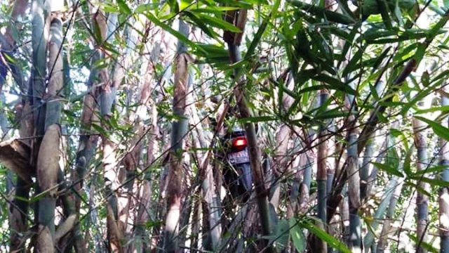 https: img-o.okeinfo.net content 2019 09 11 337 2103218 viral-ojol-dapet-order-mistis-motornya-nyangkut-di-pohon-bambu-pcCw9IoqBn.jpg