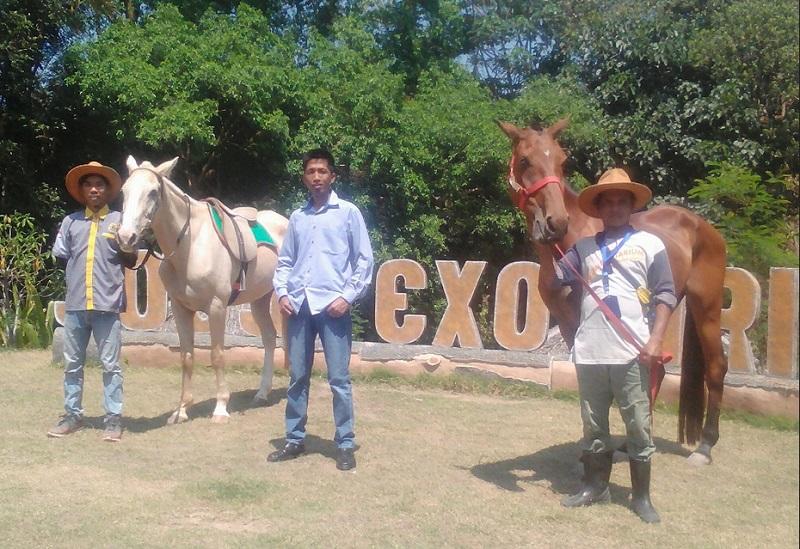 https: img-o.okeinfo.net content 2019 09 27 406 2110133 kuda-prabowo-lengkapi-koleksi-satwa-di-jogja-exotarium-ILkCTDrhNQ.jpg