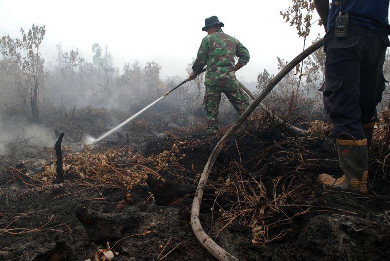 https: img-o.okeinfo.net content 2019 10 10 320 2115111 restorasi-gambut-kebakaran-hutan-di-dumai-dan-siak-berkurang-signifikan-2CrwGMxZ6N.jpg